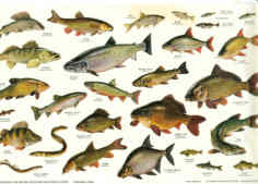 Books on british freshwater fish british freshwater for Fishpond uk