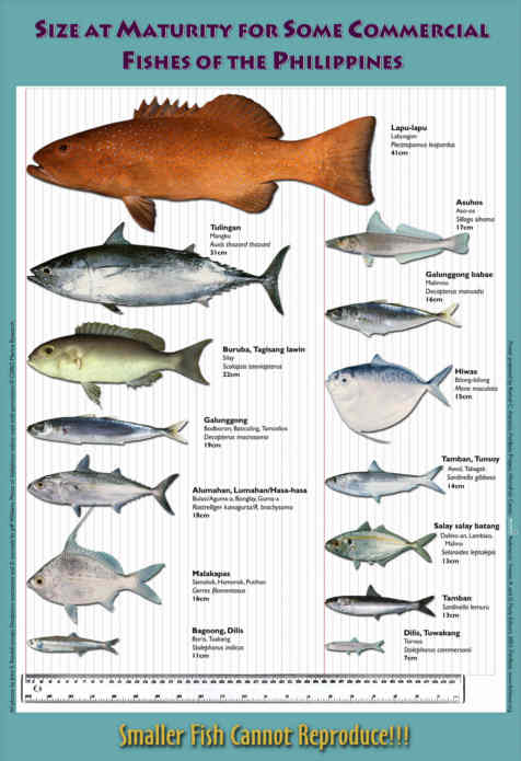 Fish And Fishes Of The Phillipines