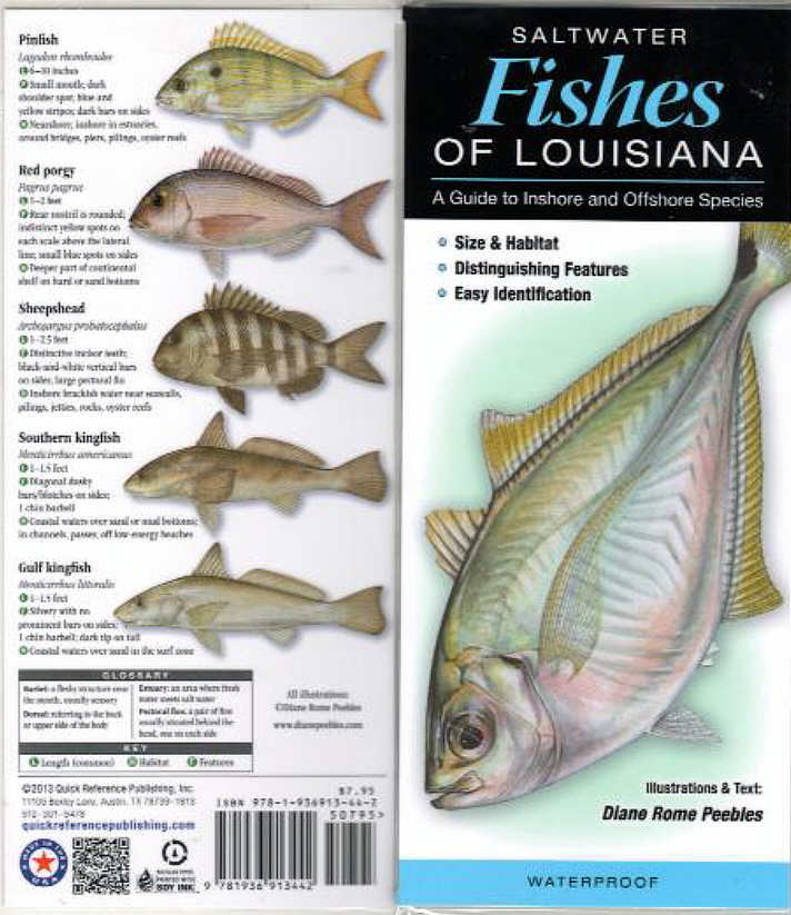 Fish identification guides reef fish identification for California saltwater fish species