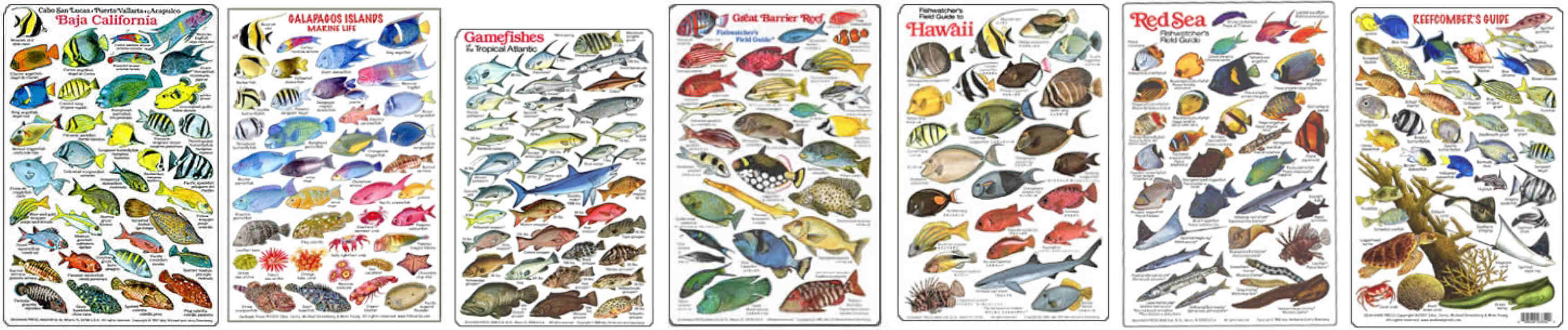 Freshwater aquarium fish identification guide - Fish Identification Guides Diving Slates And Fish Charts