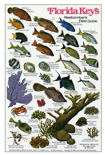 Florida Keys Reef Fish Identification http://www.calypso.org.uk/Bookshop/iD%20Charts/iD%20CHARTS.htm