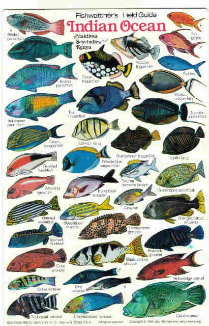 Indian ocean fishfishes maldives zanzibar fish diving books reef fish of the indian ocean sciox Choice Image