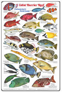 Guide to the Great Barrier Reef - Tourism Australia