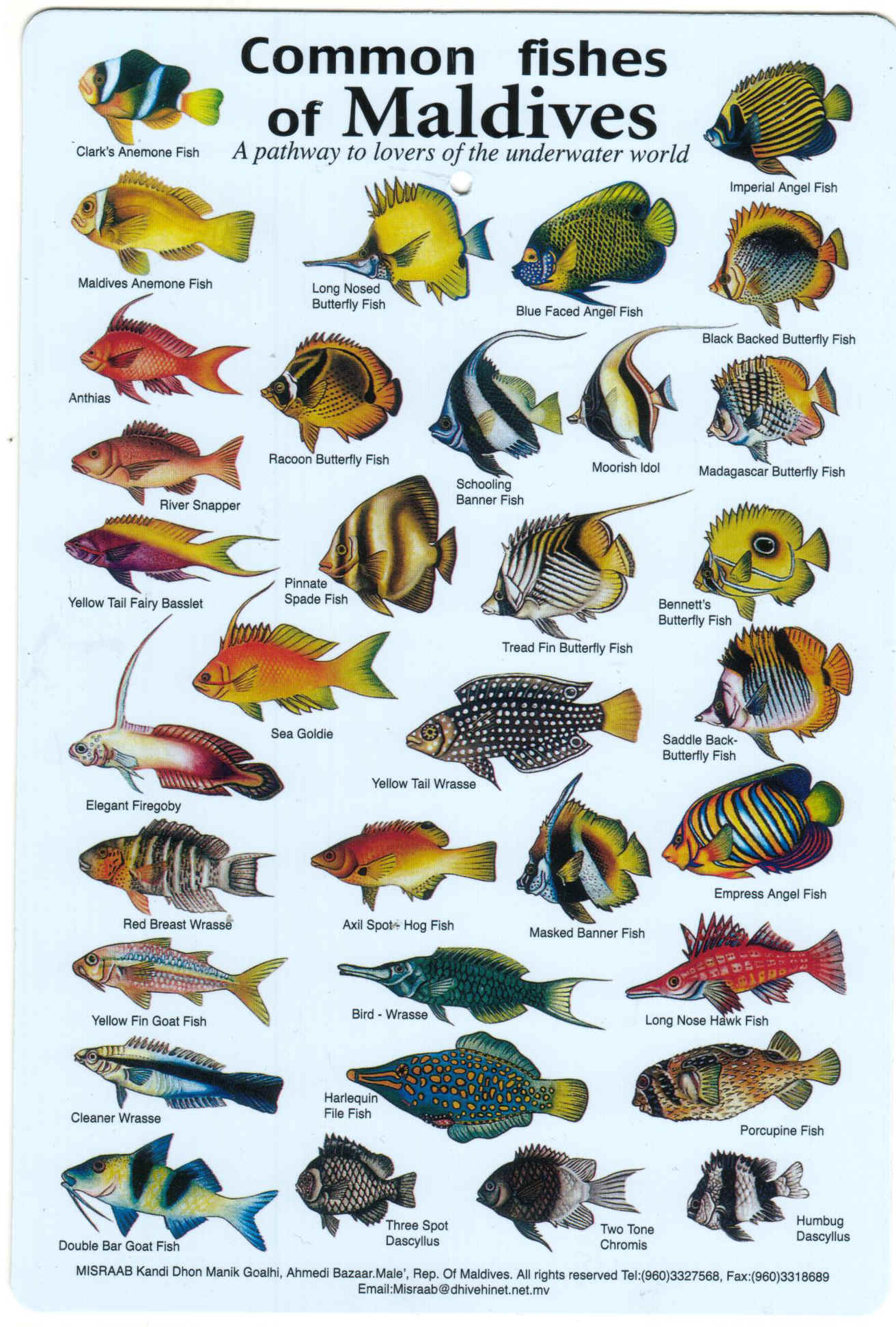 Fishes Of The Maldives Fish Books And Dive Charts Maldive