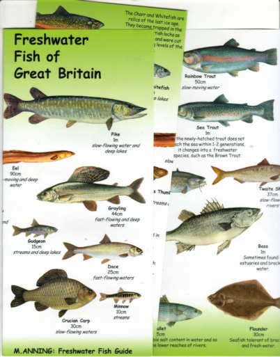 Freshwater fish in florida images freshwater fish sciox Choice Image