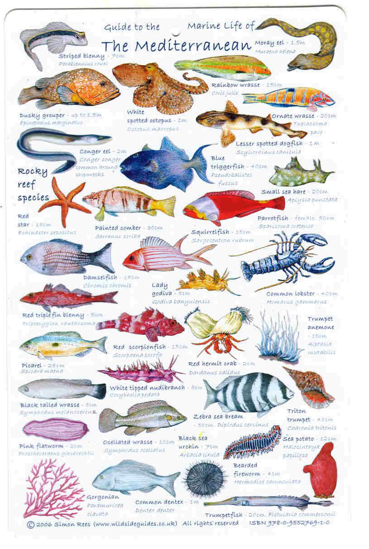 European Sea Fish