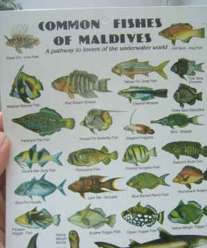 Fishes of the Maldives Identification Chart (waterproof double-sided)